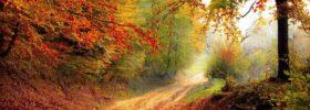 4 podzimní tipy pro lepší náladu