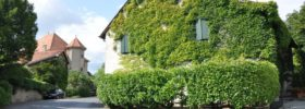 Jak na domě vypěstovat břečťan?