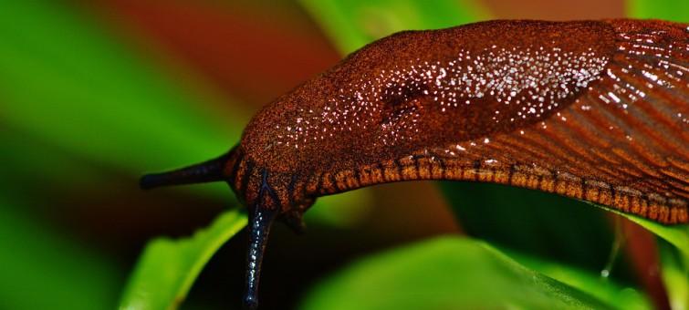 snail-1441138_960_720