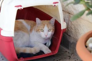 cat-1035076_960_720