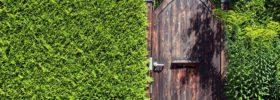 Jak založit živý plot?