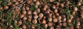 Jak sušit ořechy?