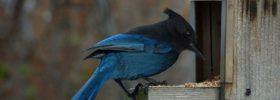 Jak krmit ptáčky v zimě?