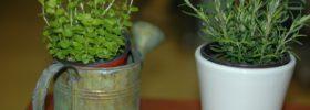 Utrácíte za koření a bylinky? Tyto si vypěstujete za oknem